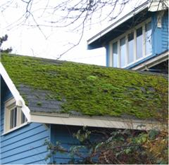 Here, a mossy roof is trapping moisture on the structure.